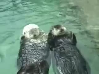 cute gifs, otters, Otters Holding Hands GIFs