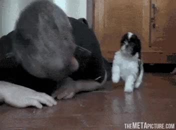 PUPPIES!!!!!!!!!!!! GIFs