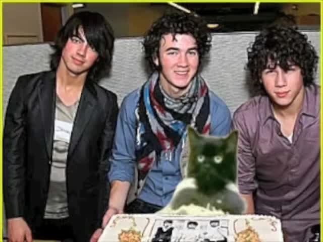Watch Fourth Jonas Brother GIF on Gfycat. Discover more blog, cat, chipmunk, do, dog, dramatic, flushing, gripp, guinea, hamster, like, on, parry, piano, pig, toilet, waffles, you GIFs on Gfycat