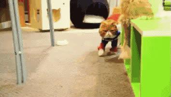 cat, supercat,  GIFs