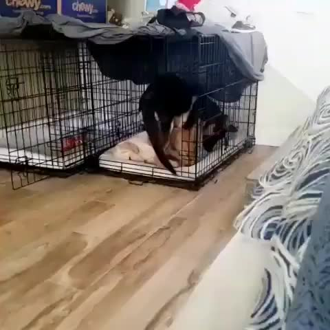 Watch and share Friend GIFs and Dog GIFs by mayaxs on Gfycat