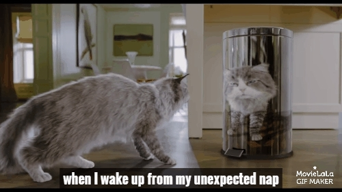 catreactiongifs, instant_regret, ninelivesmovie, Nine Lives Trailer GIFs