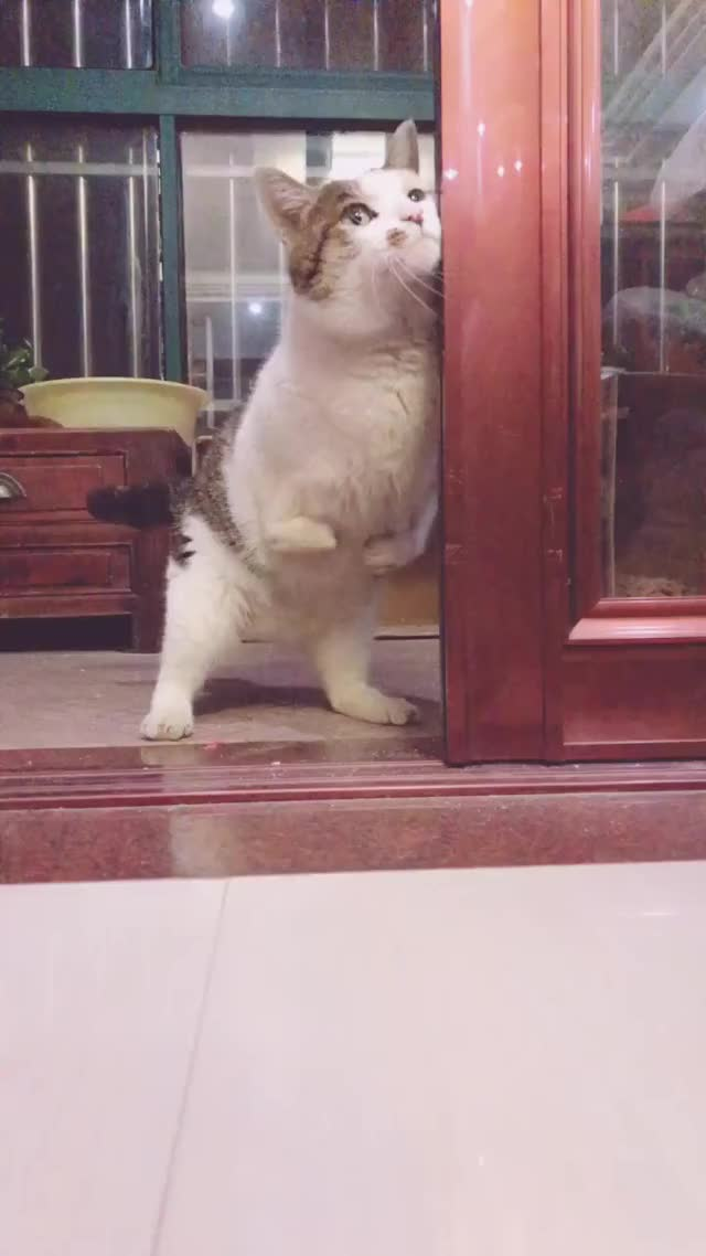 Watch this aww GIF by TikTok (@helpful_yam) on Gfycat. Discover more aww, awww, awwwww, cat, cute GIFs on Gfycat