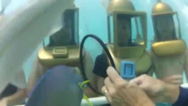 Watch and share Bermuda (Hartley's Undersea Walk) 2013 (reddit) GIFs by bernews on Gfycat