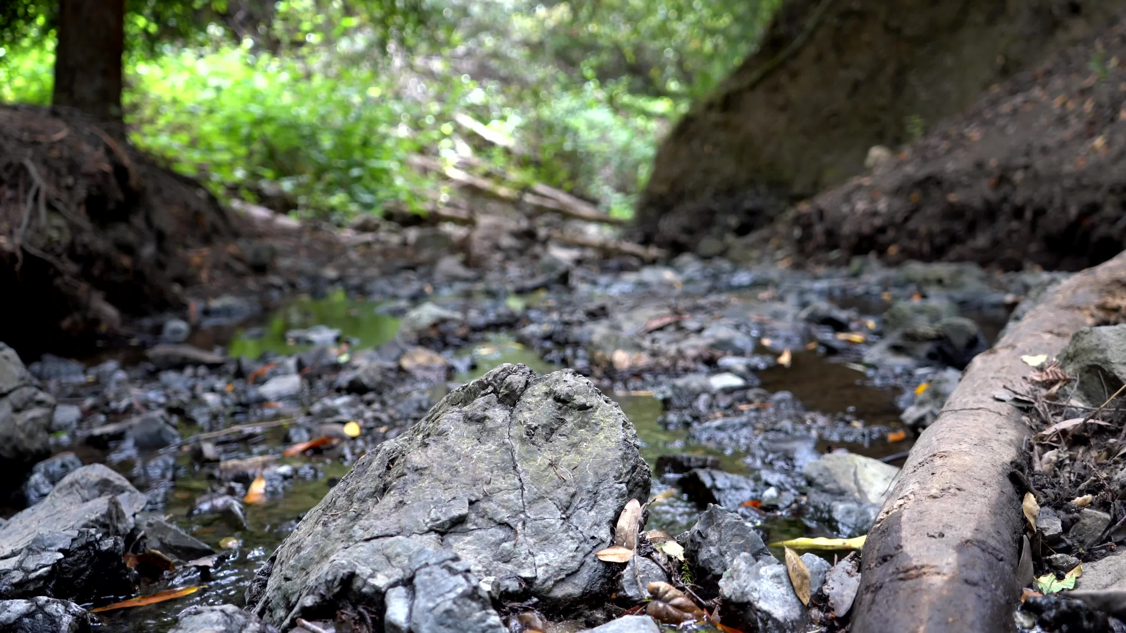 Creek, Hike, Moving Picture, Peaceful, Redwoods, Rock, Water, Woods, Peaceful Creek GIFs