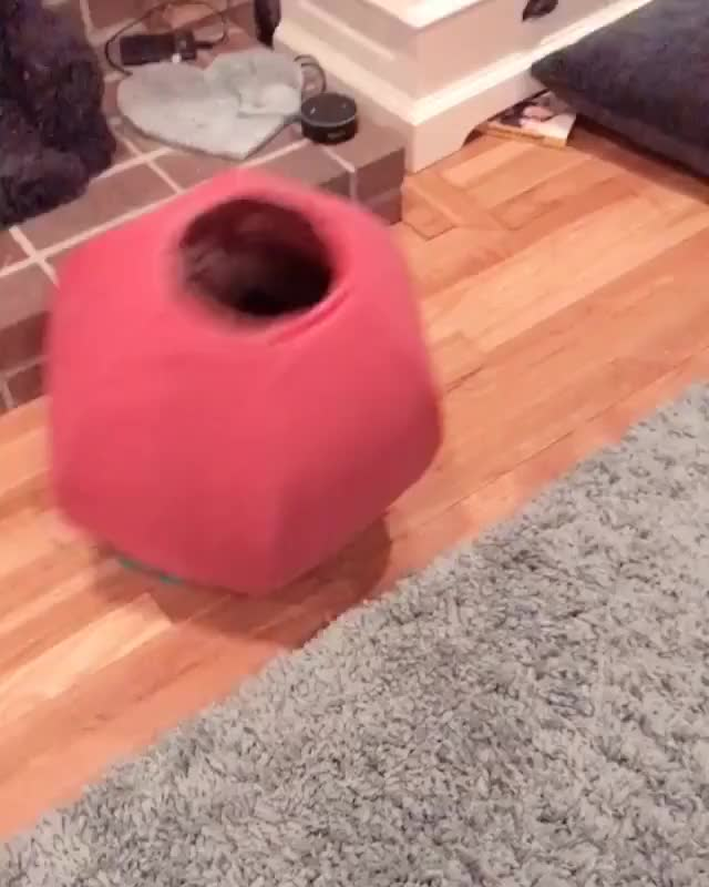 Watch /r/CatsBeingCats - video from shadowandroccoanddaisy GIF by @cakejerry on Gfycat. Discover more related GIFs on Gfycat