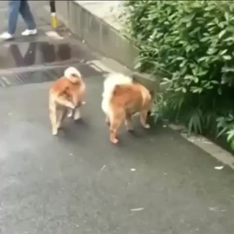 funny, dogs, Getting in the last word GIFs