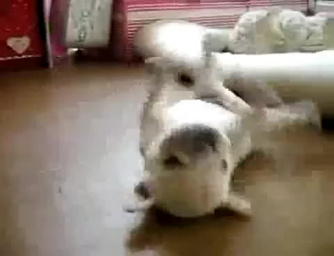 Watch this trending GIF on Gfycat. Discover more cute, puppy, roll GIFs on Gfycat