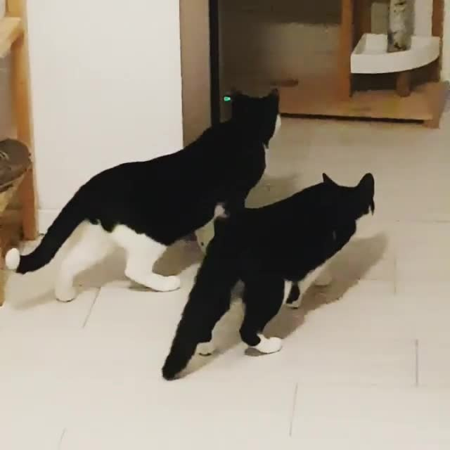 cats, I'm out! GIFs