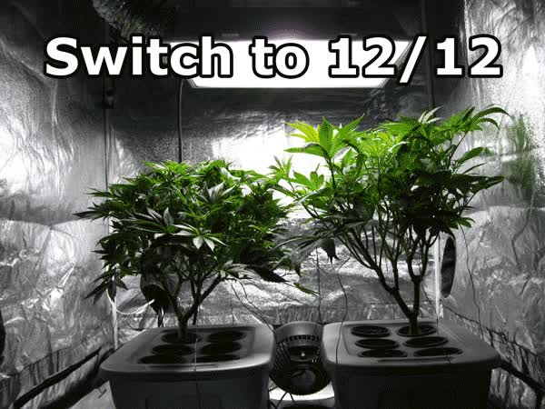 Watch and share Cannabis GIFs and Weed GIFs on Gfycat