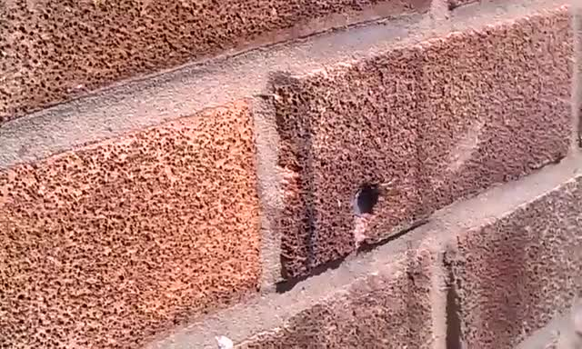 Watch A Bee trying to pull a Nail out of Brick Wall GIF by alternations (@alternations) on Gfycat. Discover more related GIFs on Gfycat