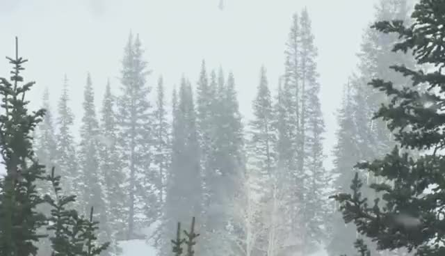 Watch and share (HD) Snow Falling In Pine Forest From Window GIFs on Gfycat