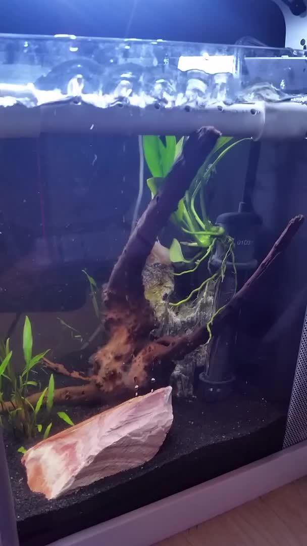 bettafish, High flow against near wall GIFs