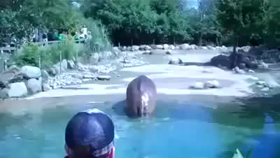 Watch and share Comedy GIFs and Hippo GIFs by formula1 on Gfycat