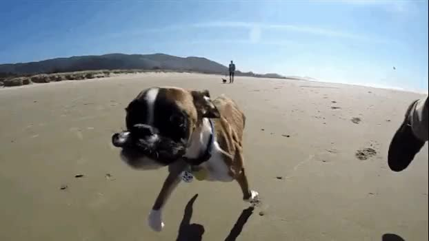 Watch boxer puppy GIF on Gfycat. Discover more related GIFs on Gfycat