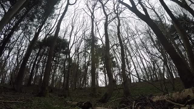 Watch FPV Pro GIF on Gfycat. Discover more forest, multicopter, quadcopters GIFs on Gfycat