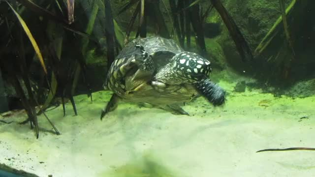 Watch this turtle GIF by @cynicalplant on Gfycat. Discover more animals, tortoise, turtle GIFs on Gfycat