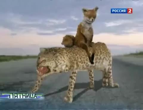 Watch Упоротая лиса в новостях GIF on Gfycat. Discover more celebs, gepard, mckayla maroney GIFs on Gfycat
