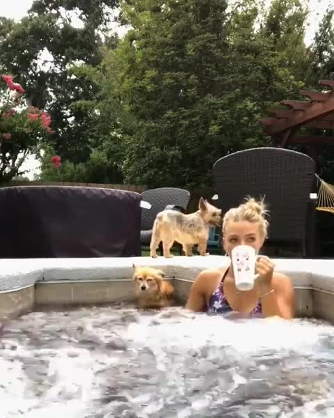 Watch and share Dogs GIFs by RespectMyAuthoriteh on Gfycat