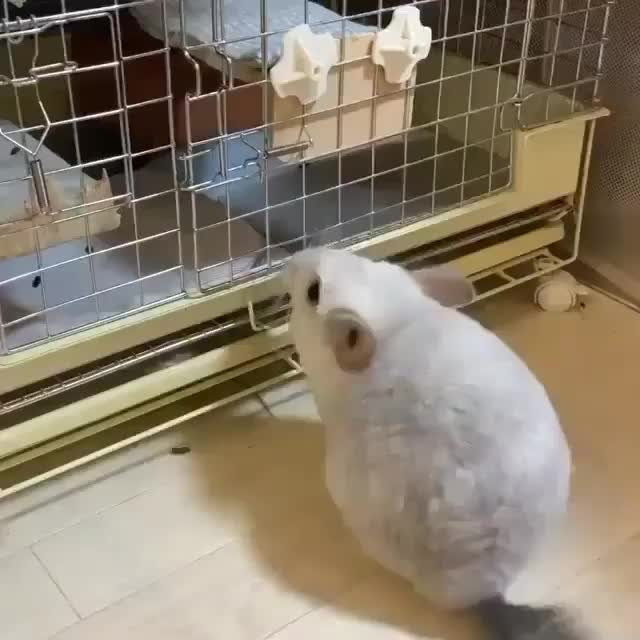 Watch and share Animal Cutte GIFs and Animalsofig GIFs by Ly Ly on Gfycat