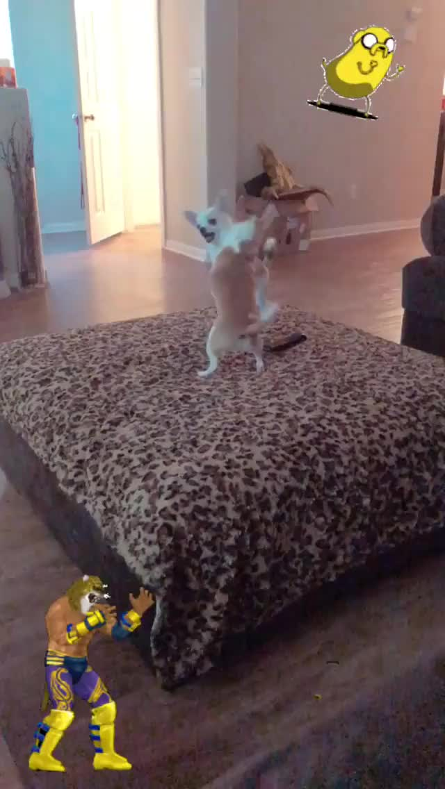Watch and share Ziennasonne 2018-09-15 09:18:28.625 GIFs by Pams Fruit Jam on Gfycat