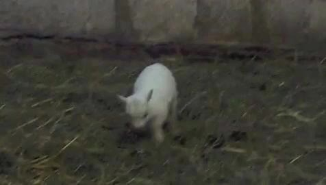Watch goat stare GIF on Gfycat. Discover more related GIFs on Gfycat