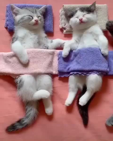 Watch and share Kittens GIFs and Cats GIFs by RespectMyAuthoriteh on Gfycat