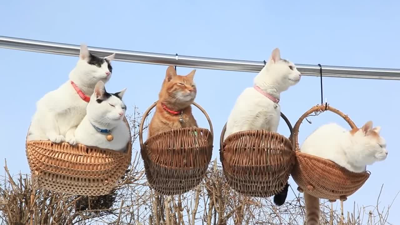 animals, baskets, cat (animal), cats, cool, cute, funny, good, kitty, nice, Nice Cats in Baskets GIFs