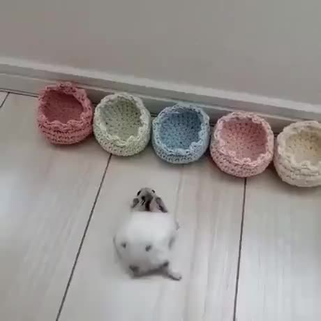 Tiny Beds for a Tiny Hamster GIFs