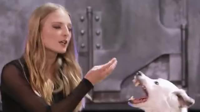 Watch this curated GIF by giffactory on Gfycat. Discover more agt, all, america's, and, curious, cute, dog, ears, got, hear, hero, me, more, pet, sara, secret, talent, tell, trainer, trick GIFs on Gfycat
