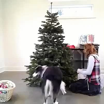 Watch Helping set up the Christmas tree GIF by @likkaon on Gfycat. Discover more related GIFs on Gfycat