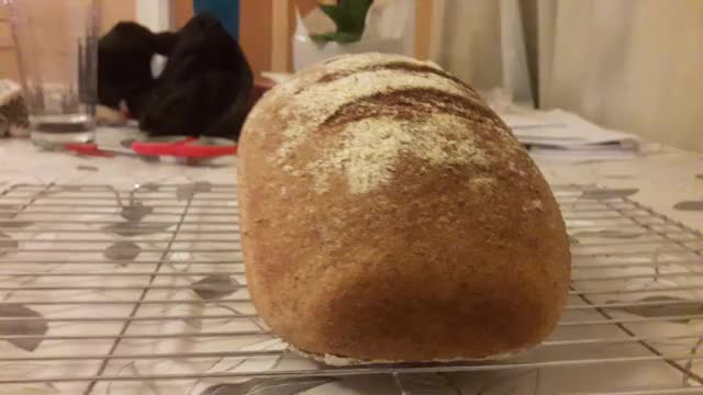 Watch and share Bread GIFs by yocabs on Gfycat