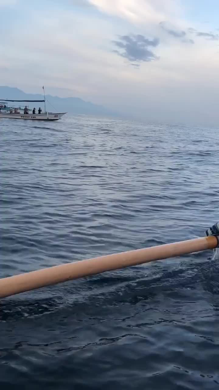 I saw the dolphins! GIFs