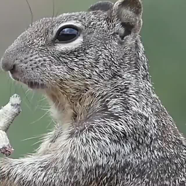 Watch and share Squirrel GIFs and Eating GIFs by PrviAxiom on Gfycat