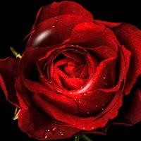 Watch and share CORAZON ROSA VIVA GIFs on Gfycat