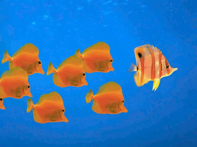 Watch and share Animation Wallpaper Gif Fish GIFs on Gfycat