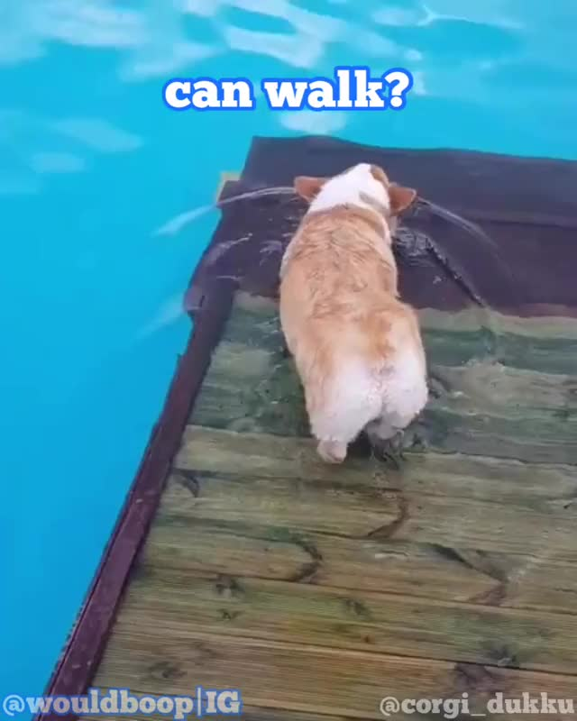 Watch and share Dog Swim GIFs on Gfycat