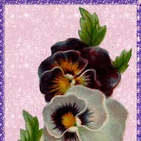 Watch pansies GIF on Gfycat. Discover more related GIFs on Gfycat