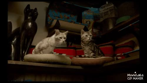 Watch and share Catgifs GIFs by comedymovies on Gfycat