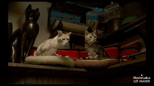 catgifs, gifsthatkeepongiving, ninelivesmovie, Nine Lives Trailer GIFs