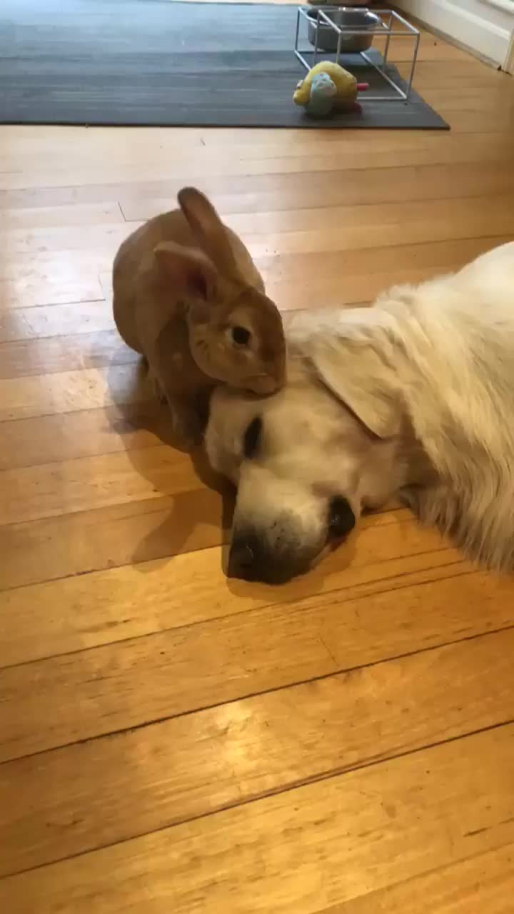 bunny, dog, rabbit, Just let it happen GIFs