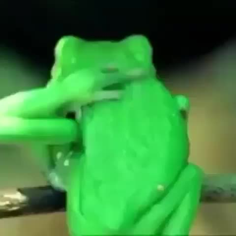 nature, 👑animal lover👑, The incredible flexibility of frogs GIFs