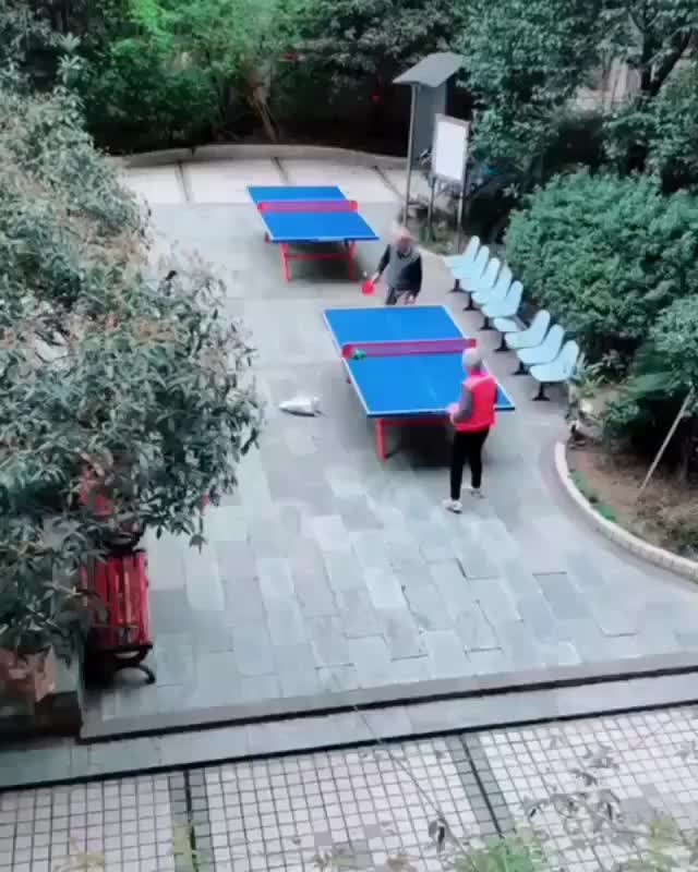Watch and share Cat Getting In On A Ping Pong Match GIFs by tothetenthpower on Gfycat