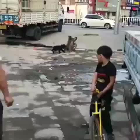 Watch and share Monkey Bicycle GIFs on Gfycat