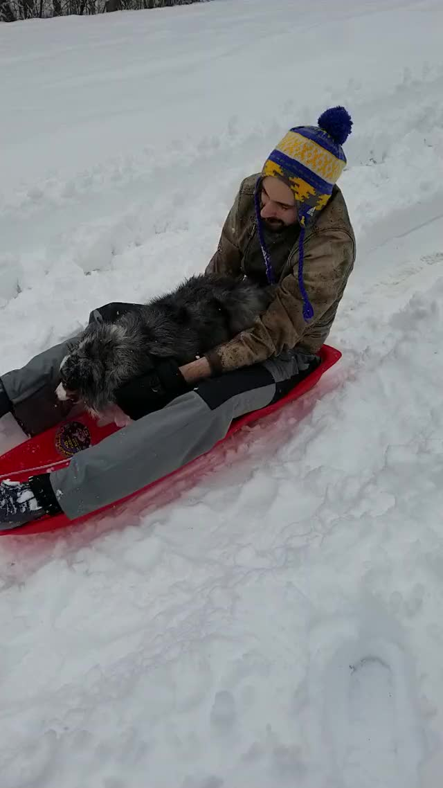 Watch and share Sledding GIFs by madiedieu on Gfycat