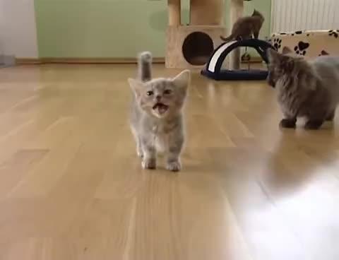 cat, cats, kitten, kitty, meow, Meow GIFs