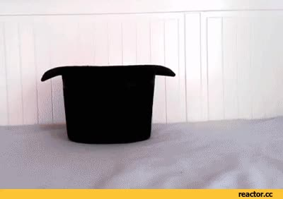 Watch Hat GIF on Gfycat. Discover more related GIFs on Gfycat