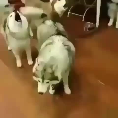 alexbpavlik, This woofer is an absolute unit GIFs
