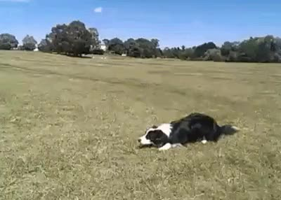Watch and share Majestic Dog GIFs on Gfycat
