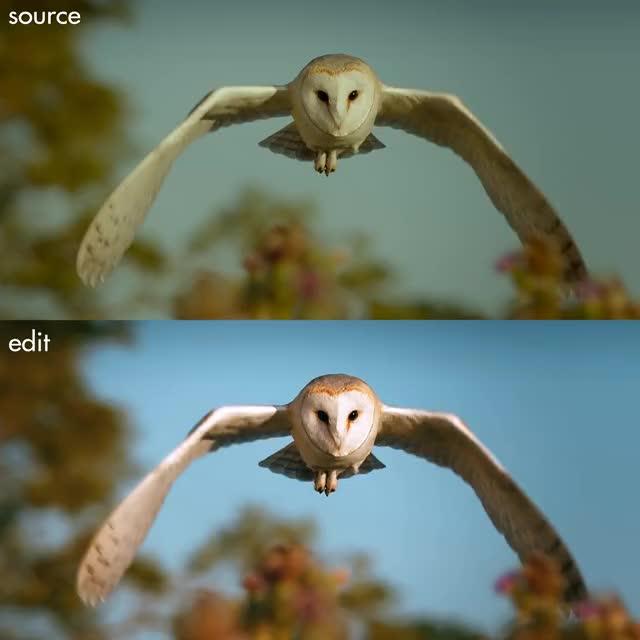 Watch Barn Owl midflight (Bonus) GIF by doom85 (@doom85) on Gfycat. Discover more related GIFs on Gfycat
